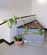 Potted plant by railing Stock Photos
