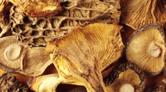 WILD MUSHROOMS IN CLOSE UP MACRO TRACKING SHOT OVERHEAD Stock Footage
