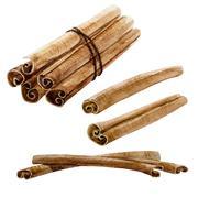 Watercolor spice cinnamon stick - stock illustration