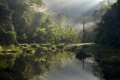 Small lake in the morning light Amazon rainforest between Itaituba and Pimental Stock Photos