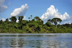 Tropical rainforest on the banks of the Rio Tapajos Pimental Itaituba Para Stock Photos