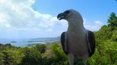 Thailand. Phuket. Eagle sits on tree closup camera front view. Karon beach. Stock Footage