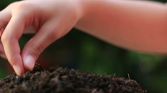 Child hand seeding plant close up shoot - stock footage
