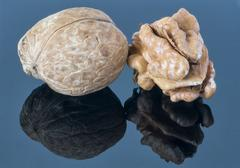 Walnut kernel on a dark background. With reflection in the foreground. - stock photo