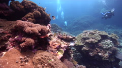 Ocean scenery expert divers with good buoyancy cruising over beautiful healthy Stock Footage