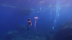 Distant group of scuba divers swimming on coral reef with Unidentified jellyfish Stock Footage
