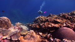 Female model scuba diver swimming on shallow coral reef in Solomon Islands, HD, Stock Footage