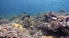 Ocean scenery diverse fish and hard coral, on shallow coral reef, HD, UP19067 Stock Footage
