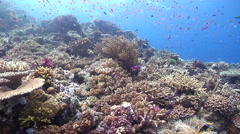 Ocean scenery very nice hard coral garden on a bommie, on beautiful healthy and Stock Footage