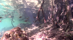 Ocean scenery in mangroves, HD, UP29320 Stock Footage