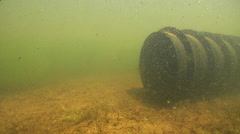 Mary River Cod swimming in Man-made pond, Maccullochella mariensis, HD, UP29003 Stock Footage