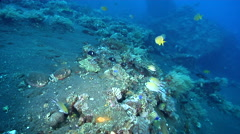 Ocean scenery lots of other fish species, on black sand slope and muck, HD, Stock Footage