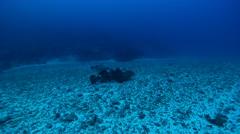 Malabar grouper swimming in deep channel, Epinephelus malabaricus, HD, UP19446 Stock Footage