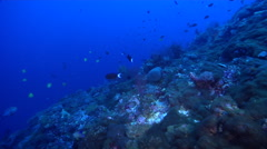 Ocean scenery on deep coral reef, HD, UP29190 Stock Footage