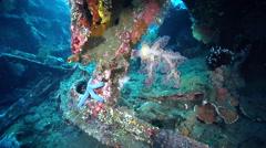Ocean scenery on wreckage, HD, UP29862 Stock Footage