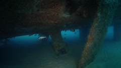 Ocean scenery lots of fish hiding under the hull, on wreckage, HD, UP29024 Stock Footage