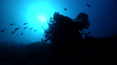 Ocean scenery silhouette and sunball, sunbeams, on deep coral reef, HD, UP29516 Stock Footage