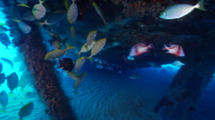 Ocean scenery many fish under stern, rabbitfish, damsel, snappers, on wreckage, Stock Footage