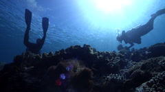 Group of scuba divers drifting on shallow wall in Solomon Islands, HD, UP29478 Stock Footage