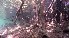Ocean scenery everything bobbing with the tiny surge, in mangroves, HD, UP29318 Stock Footage