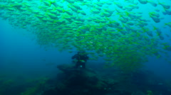 Male model scuba diver swimming on rocky reef covered in seaweed and kelp with Stock Footage