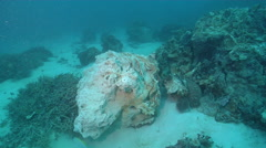 Underwater dead reef after anchor damage, Great Barrier Reef, Australia, HD, Stock Footage