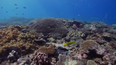 Ocean scenery slight surge speeds and slows swimover, on shallow coral reef, HD, Stock Footage