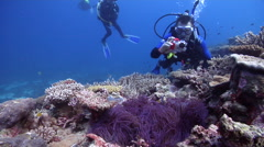 Point and shoot photographer taking images on shallow coral reef with Barrier Stock Footage