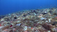 Ocean scenery anemones packed in tight together as far as the eye can see in all - stock footage