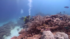 Buddy team of scuba divers taking images on shallow coral reef in Australia, HD, Stock Footage