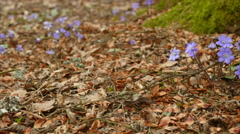 Spring flowers on forest ground, parallax move Stock Footage
