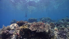 Indigenous barefoot fisherman on very shallow reef and surface in Indonesia, HD, Stock Footage