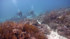 Buddy team of scuba divers swimming on shallow coral reef in Australia, HD, Stock Footage