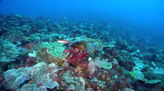 Ocean scenery approach drifting with the current, on deep coral reef, HD, Stock Footage