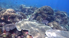 Ocean scenery strong surge slows and halts forward movement, on shallow coral Stock Footage