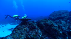 Buddy team of scuba divers swimming on rocky reef in Australia, HD, UP20332 Stock Footage