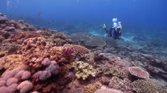 Male model scuba diver swimming on shallow coral reef with Giant table coral in Stock Footage