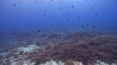 Ocean scenery great visibility, on shallow coral reef, HD, UP20358 Stock Footage