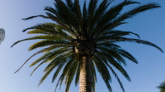 Tilt down from palm tree to Los Angeles City Hall 4K Stock Footage