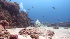 Male model scuba diver cleaning and being cleaned on shallow coral reef with Stock Footage