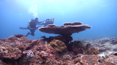 Buddy team of scuba divers on shallow coral reef with Table coral in Australia, Stock Footage
