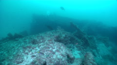 Ocean scenery poor visibility, on man made artificial reef, HD, UP20598 Stock Footage