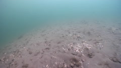 Ocean scenery fast drift over dark sand, grass and shells, on sand and coral Stock Footage