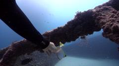 Diamondfish swimming on wreckage, Monodactylus argenteus, HD, UP20705 Stock Footage