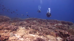 Buddy team of scuba divers swimming on shallow coral reef with Staghorn coral in Stock Footage
