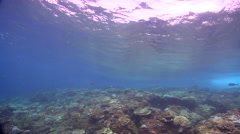 Ocean scenery waves breaking over shallow reef, on shallow coral reef, HD, Stock Footage