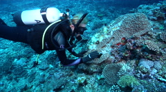 Female model scuba diver on deep coral reef with Egg cowrie in Australia, HD, Stock Footage
