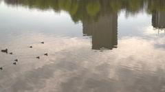 A baby ducks with their mother swimming in a lake in a social park Stock Footage