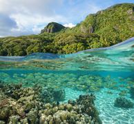 Lush tropical shore with school of fish underwater Kuvituskuvat