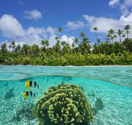 Tropical shore with coral and fish underwater Kuvituskuvat